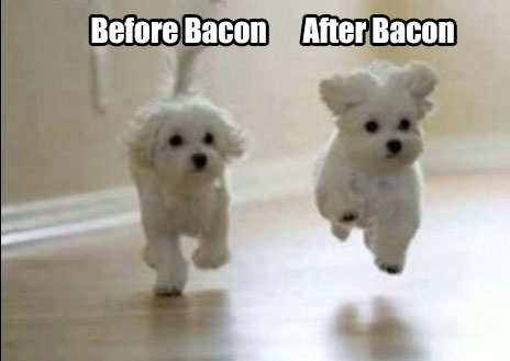 before-after-Bacon-Dogs-meme